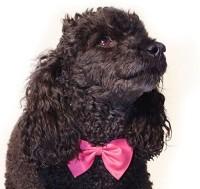 Futaba Plain Dog Collar Charm(Pink, Other)
