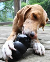 Kong Extreme Rubber Rubber Toy For Dog
