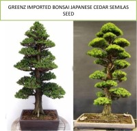 Greenz cedar Seed(50 per packet)