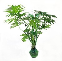 Futaba Philodendro Bonsai vine leaf Seed(50 per packet)