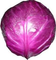 Rose Garden Cabbage Seed(20 per packet)