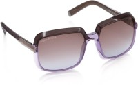 Dsquared Over-sized Sunglasses(Brown, Violet)