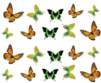 SENECIO� Trendy Butterflies Temporary Nail Tattoo Pack(Butterfly) - Price 99 75 % Off