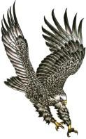 Smilendeal T2085 Eagle Temp Body Tattoo - Black(Eagle)
