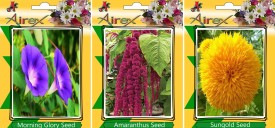 Airex Morning Glory, Amaranthus and Sungold (Summer Flower Seeds) 15 seeds per Packet Seed(15 per packet)