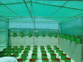 Evergreen Evergreen ! Agro Shade Net ! 75%% Shade ! Greenhouse UV Stabilized Net ! (3m x 15m) Garden Tool Kit(1 Tools)