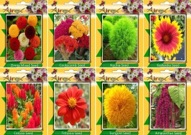 Airex Zinnia Mixed,Cockscomb,Kochia,Gaillardia,Celosia,Tithonia,Sungold and Amaranthus (Summer) Flower Seed (Pack Of 15 Seed Each Packet) Seed(15 per packet)