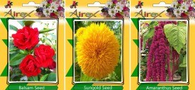 Airex Balsam,Sungold and Amaranthus (Summer) Flower Seed (pack of 20 seed each packet) Seed(20 per packet)