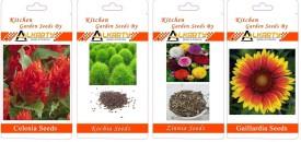 Alkarty Celosia, Kochia, Zinnia, Gaillardia summer flower seeds pack of 20 each Seed(20 per packet)