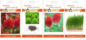 Alkarty Celosia, Kochia, Gomphrena, Wheatgrass summer flower seeds pack of 20 each Seed(20 per packet)