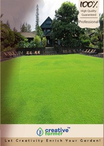 Creative Farmer Couch Lawn Grass Seeds - Useful For Sports Fields Seeds - 5000 Seeds For Garden Seed