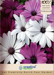 Creative Farmer Daisy White Mixed Kitchen Garden Pack By Seed
