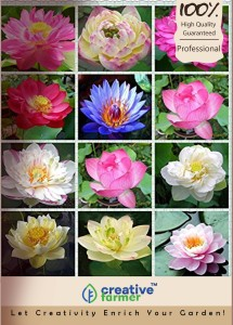 Creative Farmer lotus Flower Seeds For Growing/Planting - (Mixed Colour) -15 Seeds Seed