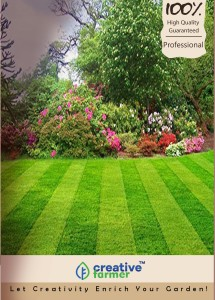 Creative Farmer Turf Lawn Grass Seeds- Dark Green Soft Grass Seeds - 2000 Seeds For Large Area Seed