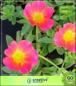 Creative Farmer Time Fuul Planting Flowers Seed