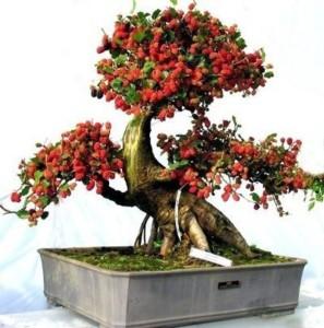 Elif Imported Bonsai Albizia Flower Plant Seed Best Price In India Elif Imported Bonsai Albizia Flower Plant Seed Compare Price List From Elif Trees 25119588 Buyhatke