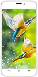Intex Aqua Q8 (White, 8 GB)