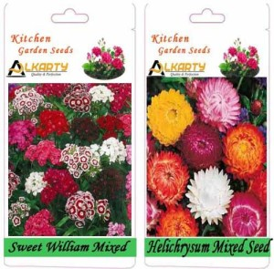 Alkarty Sweet William Mixed and Helichrysum Mixed (Winter) Seed20 per packet