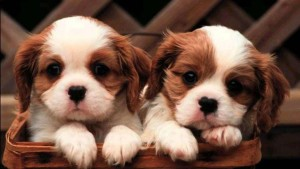 Posters For Room Collection Of Cute Little Puppies Paper Print 18