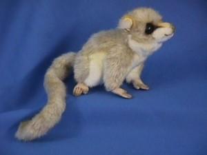 Hansa Mouse Lemur 6