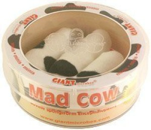 Giant Microbes Mad Cow (Bovine Spongiform Encephalopathy) Petri Dish