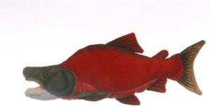 West Sockeye Salmon Cabin Critter 17