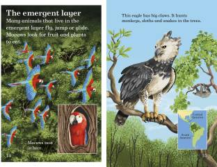 Rainforests - Read it yourself with Ladybird Level 4