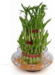 Green Plant indoor Garden Plant Container Set