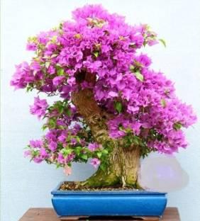 Indoor Plants Buy Indoor Plants Online at Best Prices In India