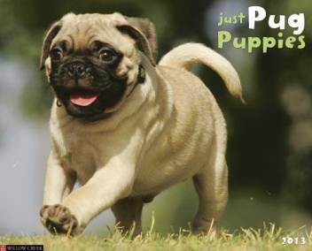 Pug Puppies By Unknown At Low Price