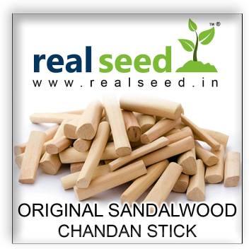 Real Seed Original Sandalwood (Chandan) Stick Superior Quality 1 Piece  35-40 Grams