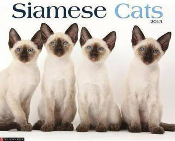 Siamese Cats Buy Siamese Cats By Unknown At Low Price In India Flipkart Com