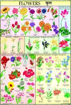 Flowers Chart For Children Paper Print