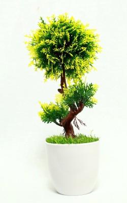 https://rukminim1.flixcart.com/image/400/400/artificial-plant/p/x/j/bbfk042018-bengal-blooms-original-imaekmy7vvzrwdad.jpeg?q=90