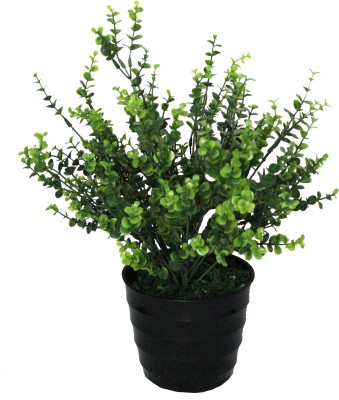 PolliNation Green Eucalyptus With Pot Artificial Plant  with Pot(38 cm, Green) at flipkart