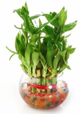 https://rukminim1.flixcart.com/image/400/400/j0tvngw0/plant-container/t/n/h/103-green-plant-indoor-original-imaeshgxthrynrqr.jpeg?q=90