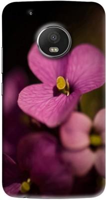 crazycases Back Cover for Motorola Moto G5 Plus Multicolor