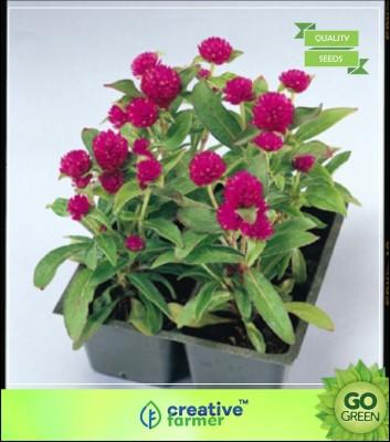 Creative Farmer Globe amaranth Dwarf Flower Seeds Seeds For Terrace Garden Seed(20 per packet)  available at flipkart for Rs.199