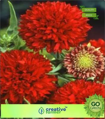 Creative Farmer blanket Flower Seed(20 per packet)  available at flipkart for Rs.144