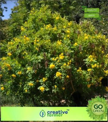 Creative Farmer Trumpet Vine Family Garden Flower Seeds For All Season Flowering Plant Seeds Seed(20 per packet)