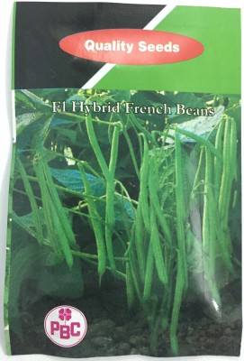 Quality Seed PBC Quality F1 Hybrid Chilly Nagma … Seed(1 per packet)