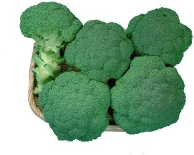 Heirloom Quality Broccoli Hybrid Seeds (Pack of 50 Seeds) Seed(50 per packet)