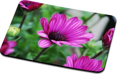 RADANYA Nature Mouse Pad 32391 Mousepad(Multicolor)