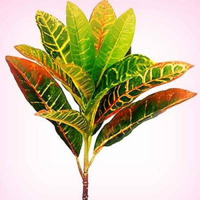 Fourwalls Beautiful Artificial Plastic Green Croton Plant Mini Bush Without Vase (15 cm x 15 cm x 36 cm, Green, Set of 2) Artificial Plant
