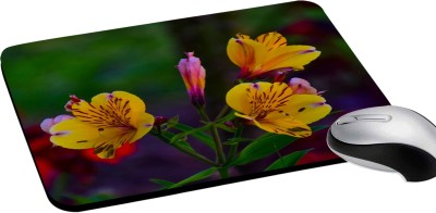 RADANYA Multicolor Floral Digitally Printed Computer Rectangular Mouse Pad with Non-Slip Rubber Base for Gaming Laptop Pc Computer (8x8) Mousepad(Multicolor)