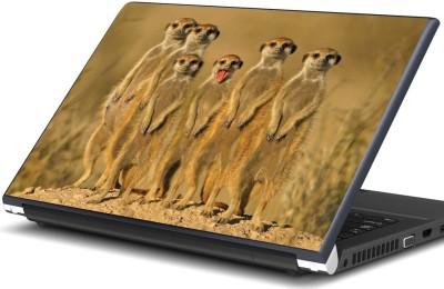 https://rukminim1.flixcart.com/image/400/400/laptop-skin-decal/8/c/f/15-6-artifa-6-meerkats-original-imae9whsqdmyqcjg.jpeg?q=90