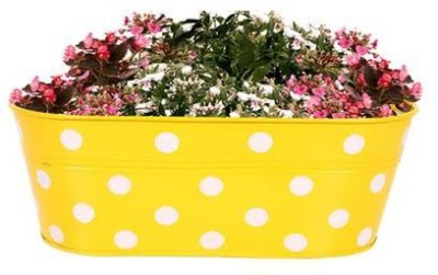 TrustBasket DOTTED OVAL RAILING PLANTER - YELLOW Plant Container Set(Metal) at flipkart