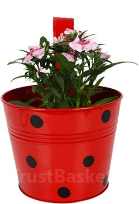 TrustBasket Single pot Railing planter - Red with Dots Plant Container(Metal, External Height - 15 cm) at flipkart