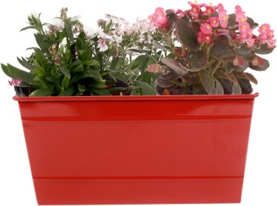 TrustBasket Rectangular Railing Planter - Red (12 Inch) Plant Container(Metal, External Height - 13.97 cm) at flipkart