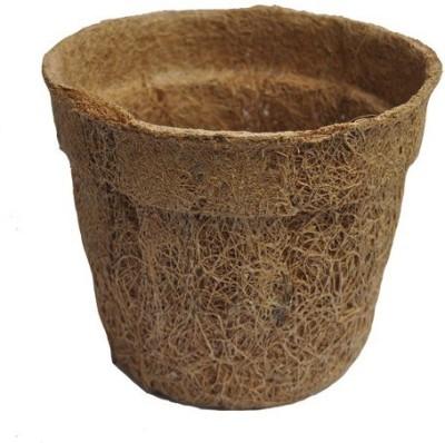 Minerva Naturals Plant Container(Clay, External Height - 12.7 cm) at flipkart